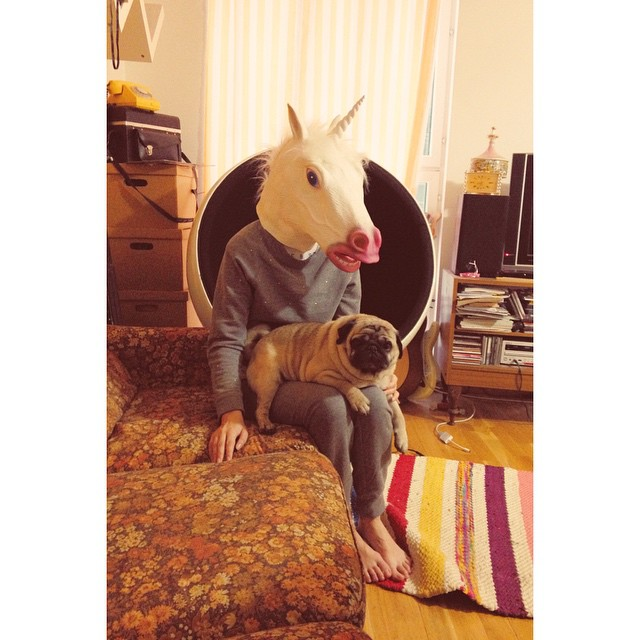 As @madicam said when he took the shot - a picture of the year. #kostja_pug #unicorn #miracle