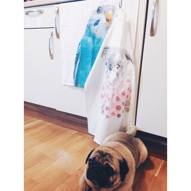 Interior designer #kostja_pug decorated our kitchen and feels pretty proud. #hmhome #cuteinterior #towel #kitchentowel #printdesign