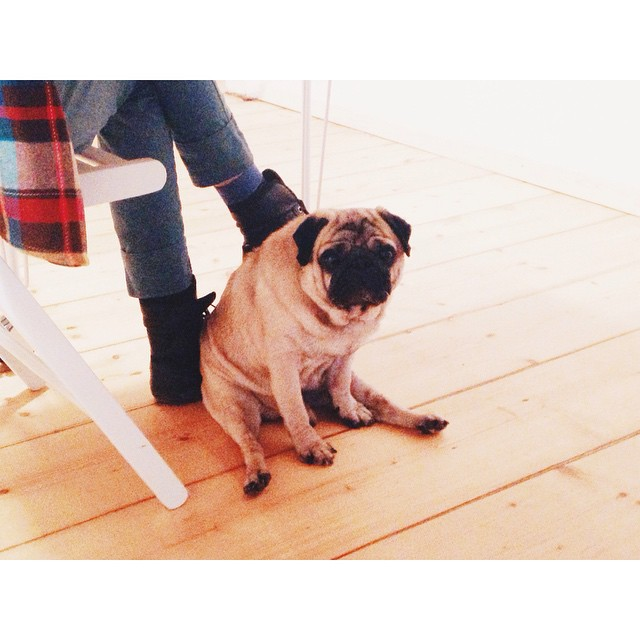 My dog is sad because I told him that my favourite person in the social media is #mysadcat #kostja_pug #hmmmstudio